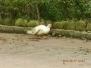 農場悠閑的動物