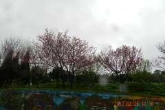 201203農場景色