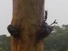 爬樹的獨角仙